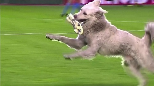 ボリビア犬スパイク加える.jpg