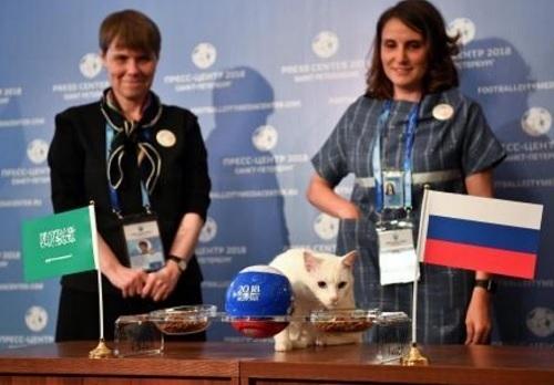 予言猫.jpg