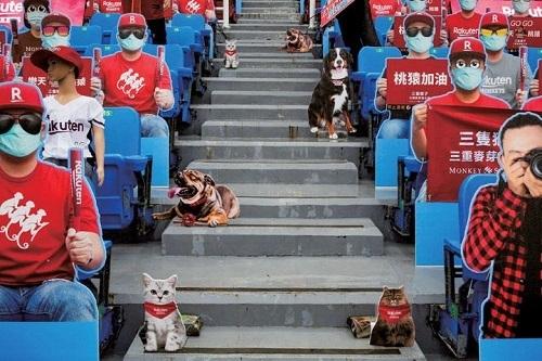 台湾野球段ボールサポ.jpg