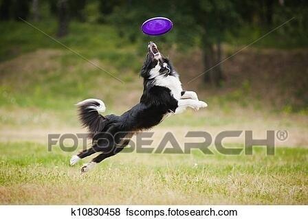 犬とフリスビー.jpg